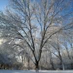 """""""frozen tree"""" by fjsjr"""