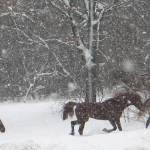 """""""horses"""" by heatherbraatz"""