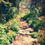 """Light on a Woodland Path (pastel)"" by ArteZoe"