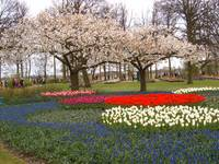Keukenhof Garden, The Nederlands