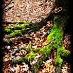 """GREEN"" by jmbarclay"