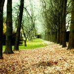 """Autumn Path"" by SherriJackson"