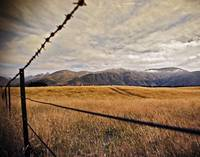 Barbed-Wire Landscape (9135)