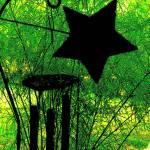 """""""STAR"""" by Isana"""