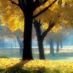"""""""Autumn Glow"""" by jackimroczkowski"""