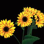 """""""The Sunflower Gang"""" by StacySchilling"""