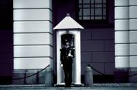 Norwedgian Royal Guard