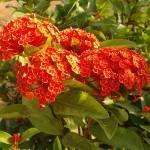 """""""Goan Garden 6"""" by ken_croslin"""