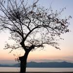 """Sunset Silhouette"" by NotJustNinjas"