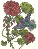Geranium and Hummingbird