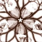 """Basket Starfish Sepia"" by DennisMash"
