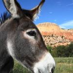 """Southwest Donkey"" by Janetreynolds"