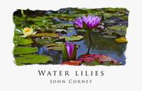 Water-Lilies Poster
