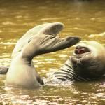 """""""Elephant Seal Yoga, II"""" by whitneybee"""