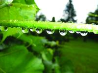 dewdrops_on_display
