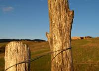 Posts and sheep farm