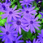 """eye-popping_purple"" by gbensonart"