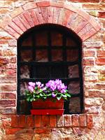 san_gimignano_windowbox
