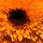 """""""Flower"""" by Nazar"""