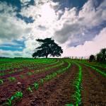 """""""Farmland"""" by Nazar"""