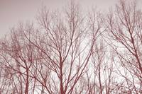 trees with sky in red