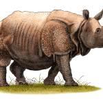 """Indian Rhinoceros"" by inkart"