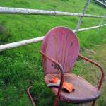 """Chair to sit and watch the cattle"" by NikonLady"