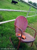 Chair to sit and watch the cattle