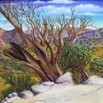 """Bristlecone Trail"" by AlexKube"