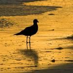 """""""DSCF1581 Sunset & Seagull"""" by eyalna"""
