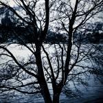 """""""Blue Tree"""" by Kjersti"""