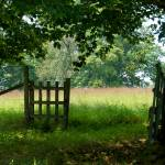 """An Open Gate"" by tricia"