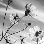 """Sunlit Flowers"" by DavidPage"