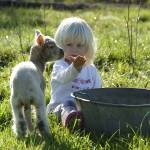 """Child playing with Lamb"" by DavidPage"