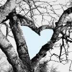 """Heart Wood"" by DavidPage"