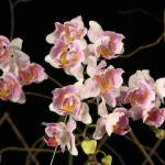 """""""Small orchids"""" by karine_gagnon3"""