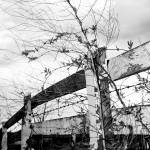 """Savage, Steven E., Manassas Horse Fence #1, Manass"" by Steve_Savage"
