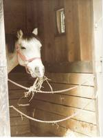 Vintage Horse in Stall