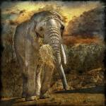 """African Elephant"" by fesign"