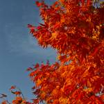 """""""Fire in October"""" by rjev"""