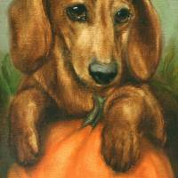 """Pick Me! Dachshund Puppy and a pumpkin by Violano"" by stella"