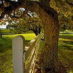 """""""Horse Fence and Old Oak Tree 8882b2b"""" by CooperSlay"""