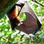 """bat"" by avisualzen"
