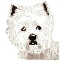 West Highland Terrier Head Study