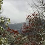 """""""Winter Leaves"""" by SPayne"""