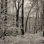 """Snow in the Trees"" by SPayne"