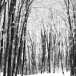 """""""Mourning The Winter_5"""" by Gracey"""