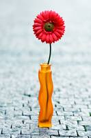 red daisy in vase on street