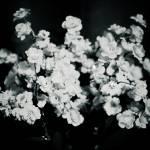 """""""Flora"""" by emilyheskett"""