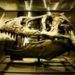 """T-Rex Skull"" by emilyheskett"